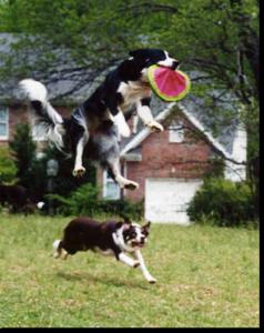 bett padgett's flying dog image